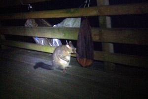 A visitor at Pelion hut